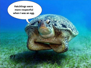 Cute Turtle Pictures Quotes