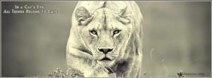 Lioness Facebook Cover