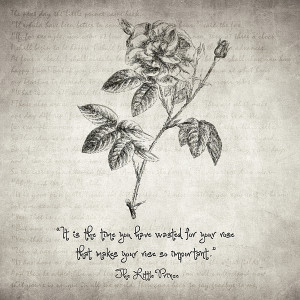 The Little Prince Rose Quote Print by Taylan Soyturk
