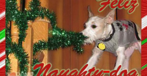 Funny-dog-christmas-card-cards-doggy-holiday-feliz-navidad-460x240.jpg