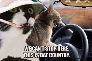 Cats Funny Cat Pictures