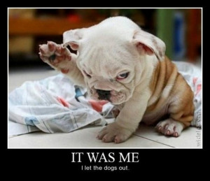 Funny-cat-dog-Top-25-funniest-cat-and-dog-quotes-6.jpg