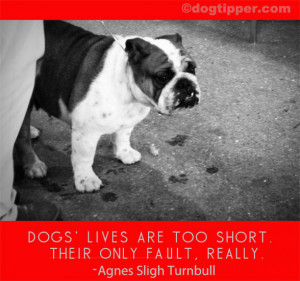 Dog Loss Quotes Dog quotes: sad quotes, loss,