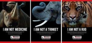 Endangered Rain Forest Animals Endangered Rain Forest Plants