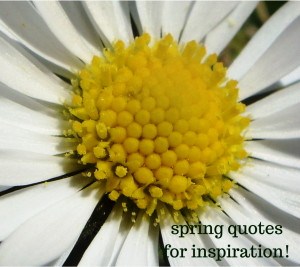 Spring Quotes for Inspiration!