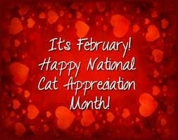 month of february - adopt a cat