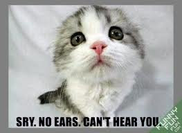 Funny cute cat sorry no ears