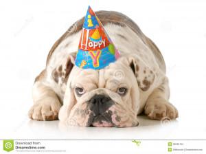 Sad birthday dog - english bulldog wearing birthday hat isolated on ...