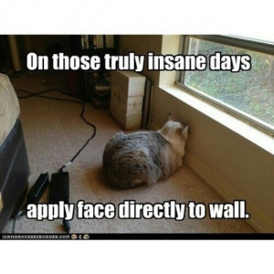 Bad Day Meme Funny Bad day #cat #humor #cats