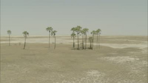 footage-desert-oasis-sand-arid-humid-a-spanning-view-of-a-desert-oasis ...