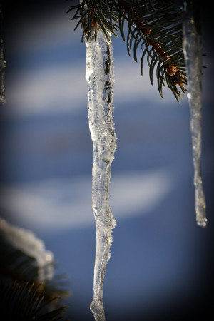 realized this morning why we used to put tinsel icicles on our ...