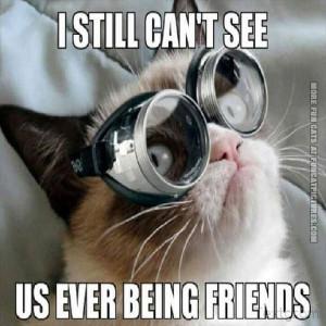 funny cat pics grumpy with glasses