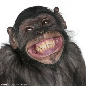 微笑的猴子