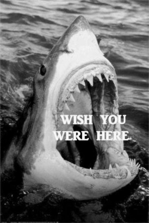 funny-picture-shark-jaws-ocean-wish-here