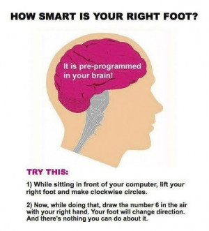 admin Pictures 6 brains , tricks