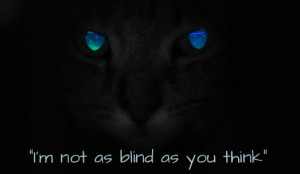 ... warrior cat quotes displaying 18 good pix for warrior cat quotes