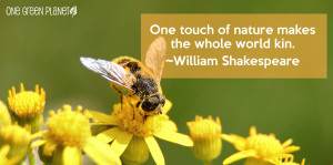 30 Inspirational Environmental Quotes Green Buzz