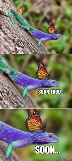 Fabulous Lizard LOL MEME 2015