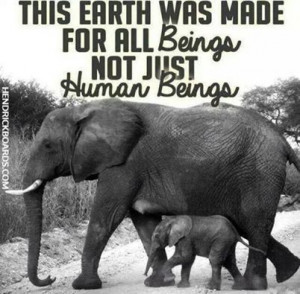 Animal Rights Quotes 2 images above is part of the best pictures in ...