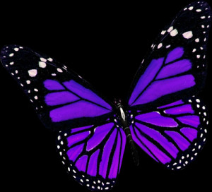 purple-butterfly