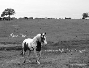 Related Pictures horseback riding quotes horse cartoon kootation com
