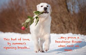 Cute Animals Quoting Shakespeare!