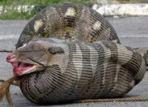 Funny Snake (14)