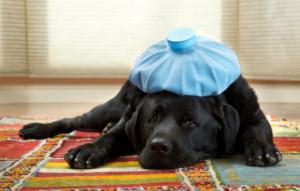 sick-as-a-dog.jpg?w=600&h=0&zc=1&s=0&a=t&q=89