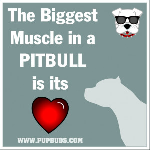 Pitbull Sayings In a pitbull is its heart