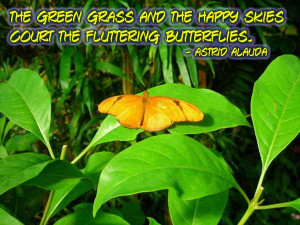 Butterfly Image Quotes And Sayings