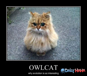 Owl_Cat_funny_picture
