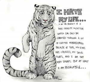 Hate My Life – White Tigers Are NOT Natural