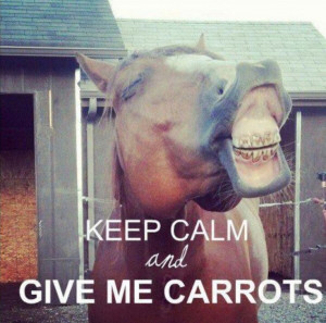 Silly horses. Keep calm. Horse quotes and sayings. Cowgirl life ...