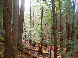 250px-A_Walk_in_the_Woods_(5339519064).jpg