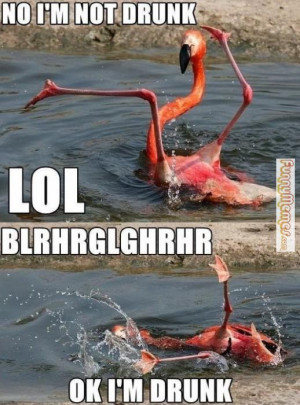 Animal memes – No, I'm not drunk