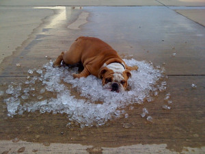 Dogs And Hot Weather - 17 Tips For Keeping It Cool This Summer - dog ...