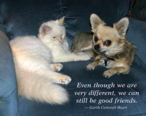 White Cat and Chihuahua with Quote