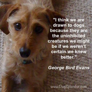 Quote about Dogs by George Bird Evans