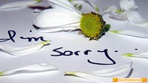 sorry boyfriend