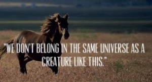 War horse quote (Loved this movie