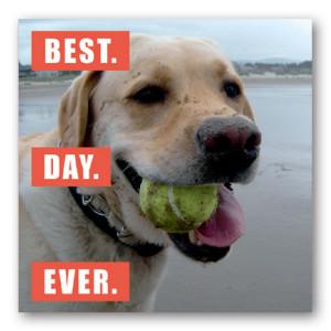 ... -magnet-lol-funny-fridge-dog-best-day-ever-yellow-lab-labrador.jpg
