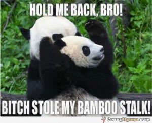 Funny Panda Captions Angry-baby-panda-funny.jpg