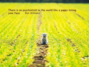 Quotes about Dogs and People .....click here to find out more ...
