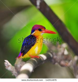 Colorful Bird Small Beautiful