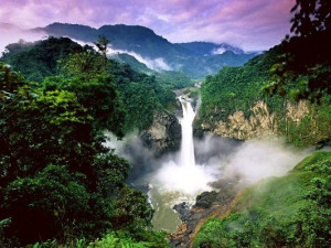 ... rainforest is due to the destruction of the tropical rainforest
