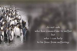 Do not ask who has caused me to suffer but who i can help to be free ...