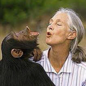 Jane Goodall - past winner of the Kyoto Prize for Biological sciences ...