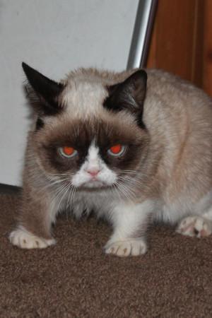 Tard The Grumpy Cat Quotes