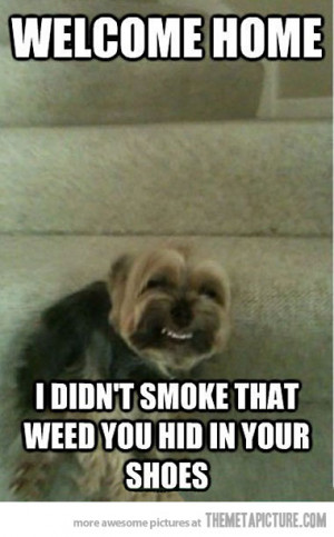 Funny photos funny dog laughing stairs