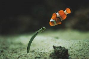 animal, cute, fish, green, kiss, love, nemo, photography, sea, water